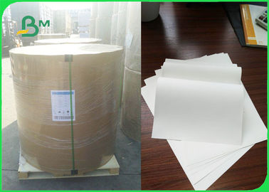 Double Coated Jumbo Roll Paper For Bento Boxes / Food Bags